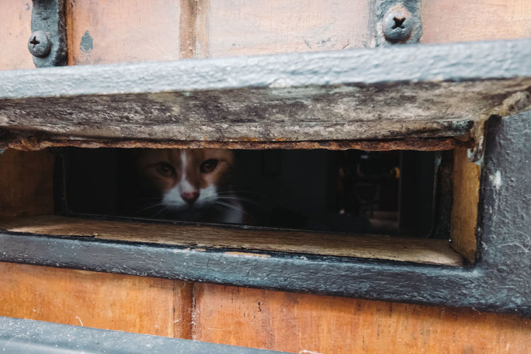 Portrait of cat peeking through metal grate