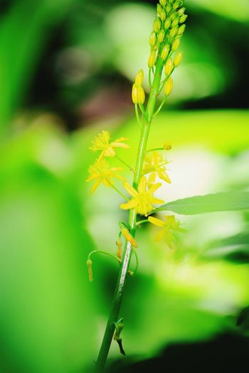 Perspectives On Nature Insect Nature Green Color Plant Close-up No People Leaf Animal Wildlife Outdoors Day Flower Animal Themes