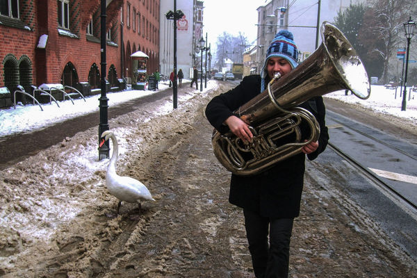 A Swan enjoying the music of a wedding brass band just before Christmas. Winter Architecture Bird Building Exterior Built Structure City Day Discover Berlin Leisure Activity Lifestyles Men Music Festival Musician Life One Person Outdoors People Real People Snow Standing Street Swan Tree Tuba Walking Winterwonderland