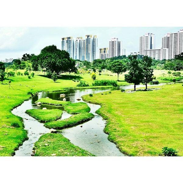 Data collection at bishan park! NoEdits  Nofilter DreamChaser Park bishan bishanpark sg nparks singapore landscape