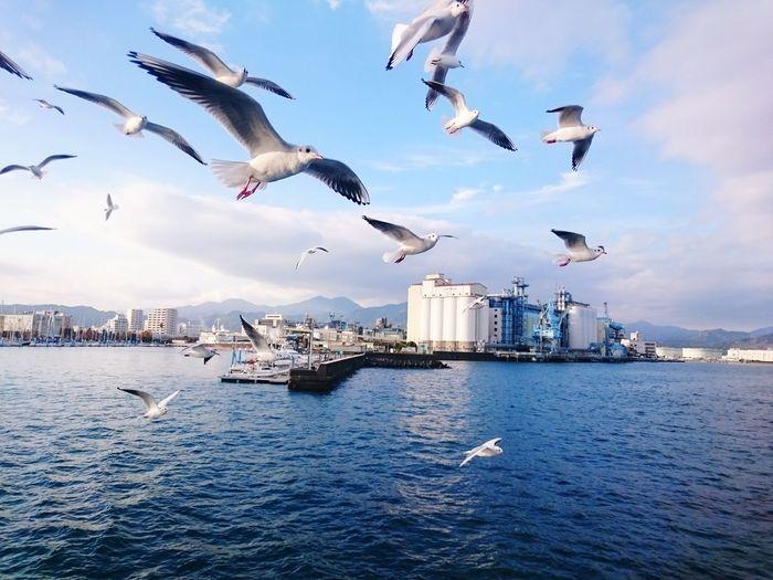 Seagulls Sea