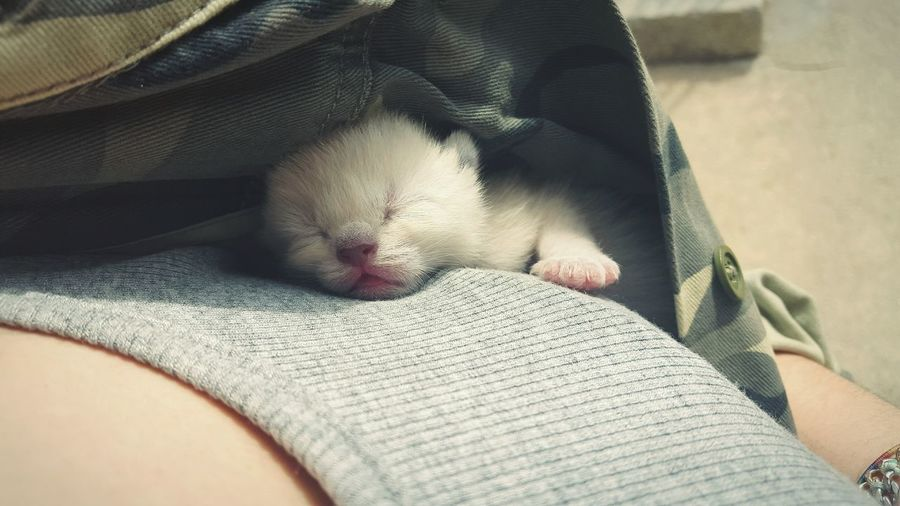 Cat Sleeping Under Jacket