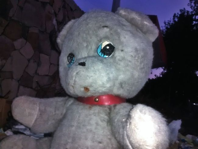 Oso Tedybear Relaxing Urban Decay Check This Out
