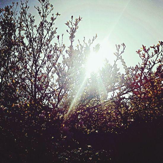 Autumn Colors sun First Eyeem Photo