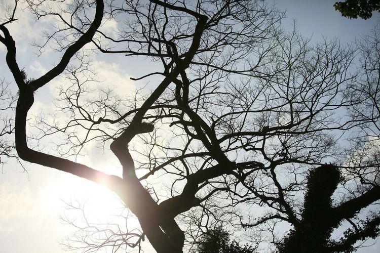 梅見に行ったけど終了してた………代わりに撮ったのはこんなのσ(^◇^;) Taking Photos Enjoying Life Silhouette シルエット部 Snapshot Tree Silhouette Tree And Sky Tree