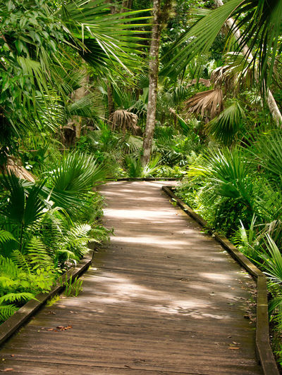 An amazing walk