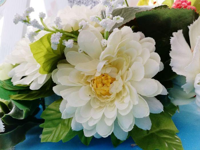 Flower Plower Flower Flower White Flower Head Flower Petal Peony  Close-up Plant
