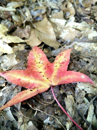 Fall Leaf Leaves Autumn Colors