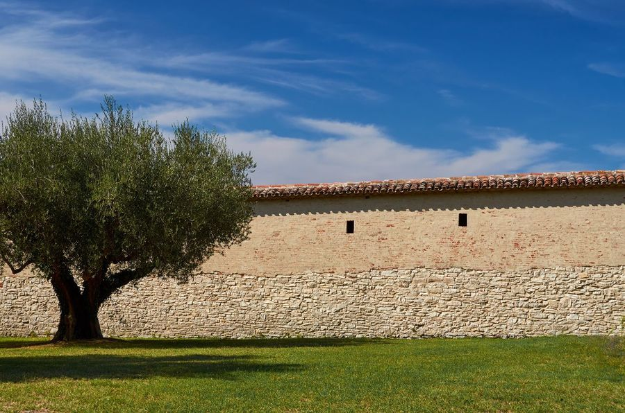 Fortress wall and olive tree, Castiglione del Lago Italy Umbria Castiglione Del Lago Blue Sky Clouds And Sky Wall Fortified Wall Fort Fortification Architecture Historic Historical Building Tree Olive Tree Grass Nature No People Outdoors Built Structure Architectural Lines