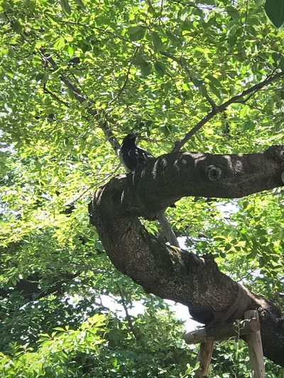 Bird on tree Sunlight Plant Green Color Shadow Nature Tree Day No People Animal