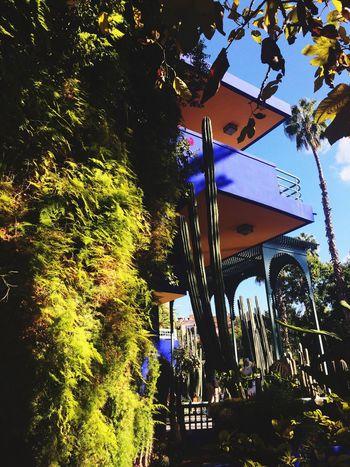 JardinMajorelle Majorellegarden Majorelle Yvessaintlaurent