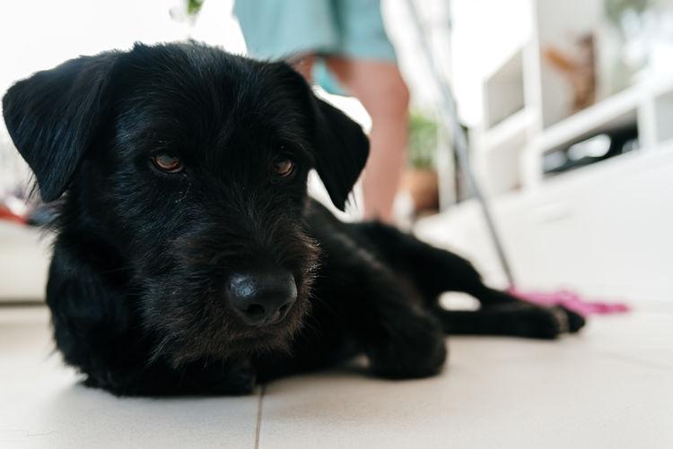Portrait of black dog relaxing on floor