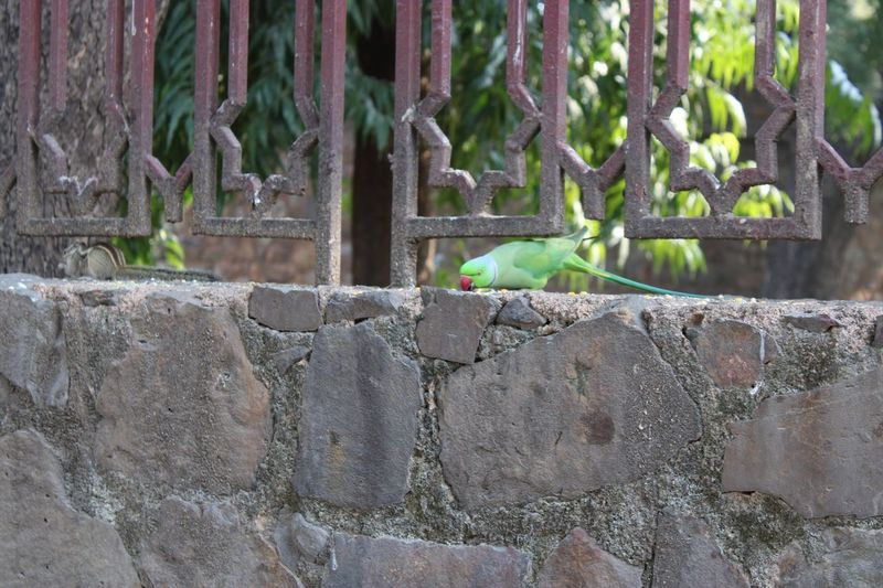 Rose ringed parakeet & five striped palm squirrel Day Architecture No People Plant Nature Built Structure Outdoors