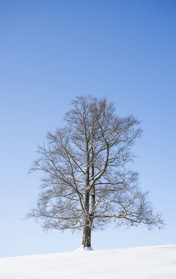 Bare tree against clear sky during winter