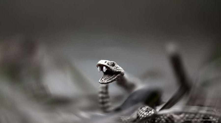 Toyphotography Schleich Snake