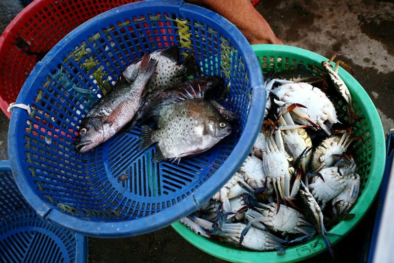 High angle view of crabs and fishes in basket at market stall