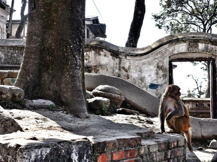 Monkey sitting on tree trunk