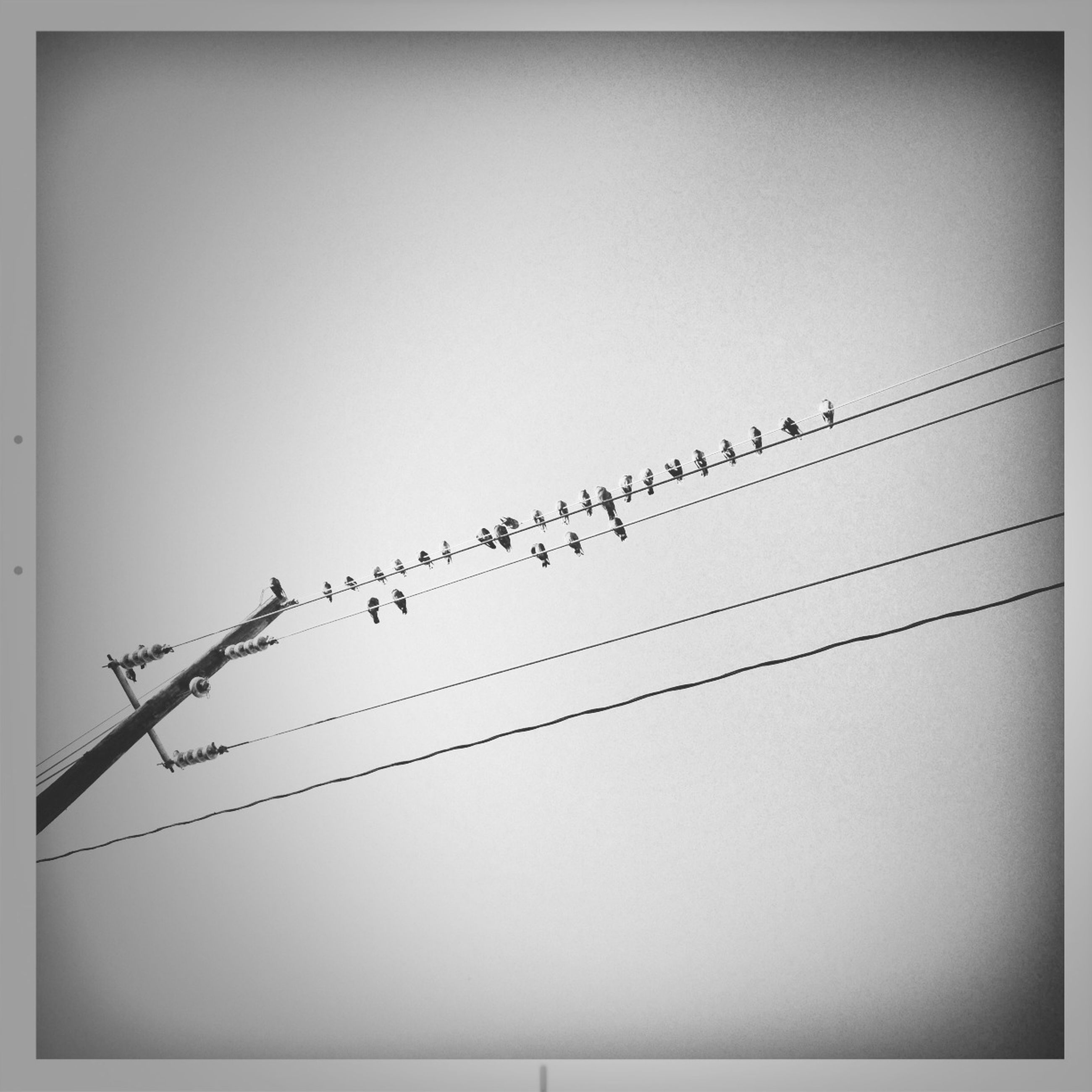 bird, animal themes, animals in the wild, wildlife, low angle view, perching, flying, clear sky, power line, cable, flock of birds, silhouette, copy space, connection, nature, no people, outdoors, zoology, day