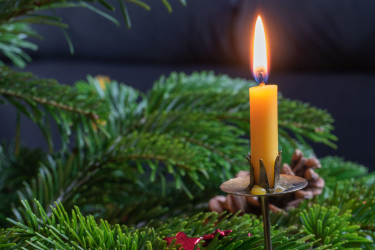 Close-up of lit candles on plant