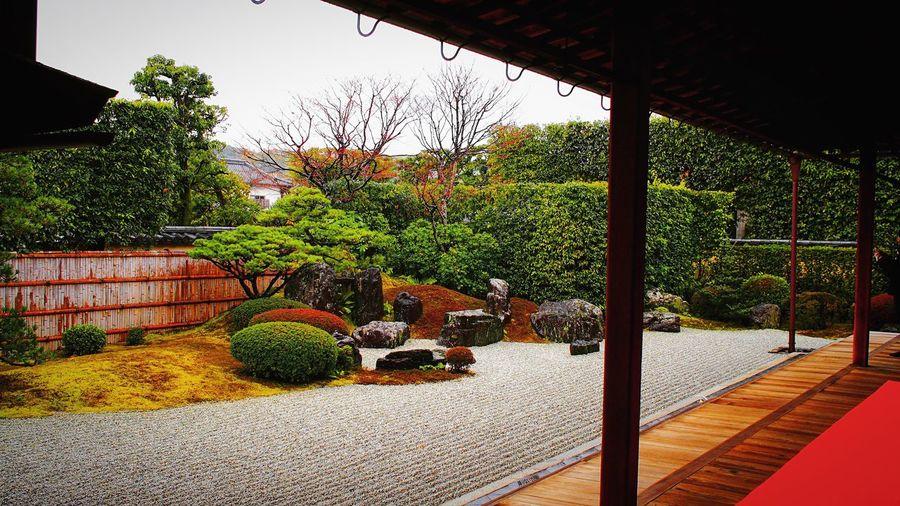 大徳寺 大徳寺塔頭 興臨院 京都 Kyoto Kyoto, Japan Travel Destinations Relaxing 3XSPUnity Hello World Kyoto Garden Garden Enjoying Life Japanese Garden