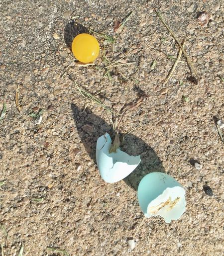 One tough yolk! Walking the dog and saw this robin's egg that had fallen from a very tall tree. Wow! Egg Unusual Egg Yolks Eggs... Broken Egg Shells Broken Egg Interesting Interesting Perspectives Capture The Moment Iphonephotography Captured Moment Learn & Shoot: Simplicity