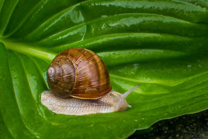 My little friend yesterday on a rainy dayNaturelovers Photographer Travel Bestoftheday EyeEm EyeEm Nature Lover Nature On Your Doorstep Check This Out Enjoying Life Nature_collection Photooftheday Animals Animal Animal Themes Snail Green Nature Travel Photography Explore Traveling Travelling Beautiful Love Rain Adventure