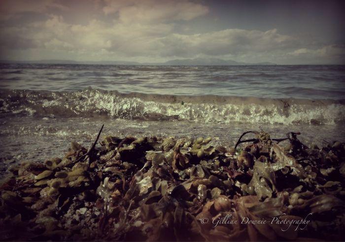 Gentle wave over seaweed Water_collection Beachphotography IPhoneography NEM Memories