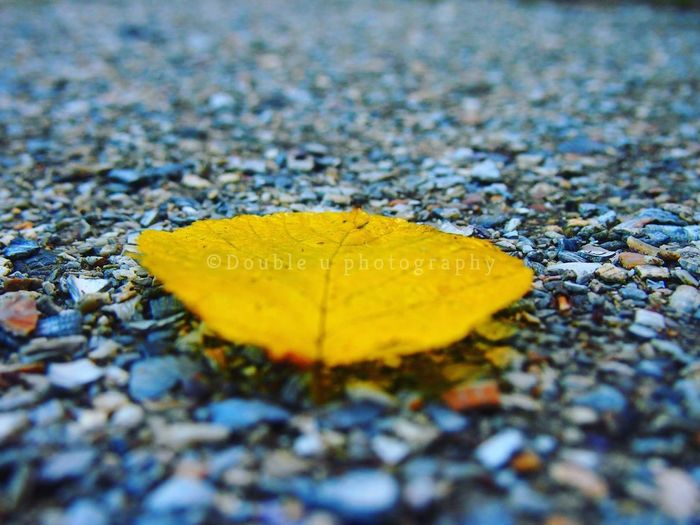 Leaf Autumn Yellow Change Outdoors Selective Focus Day No People Close-up Beauty In Nature Fragility Social Issues Magic Moments Focus On Foreground Photograph Olympus Camera Nature_collection Plant Nature Yellow Leaf