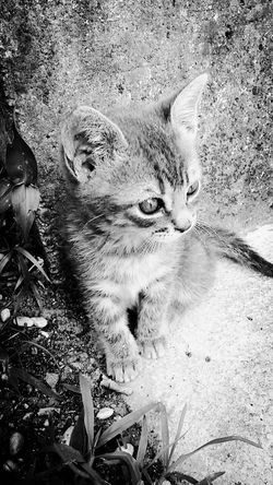 Small Cat Cat Lovers Black And White