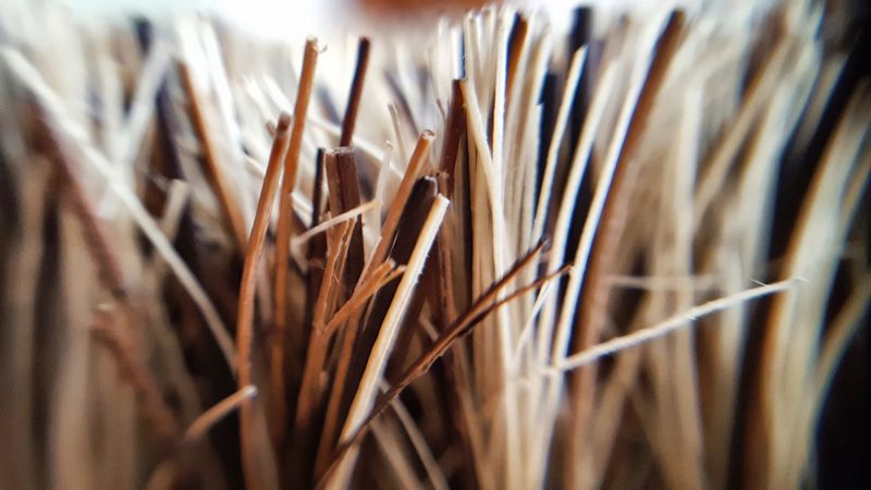 Selective Focus Close-up No People Nature Day Outdoors Bristles Brush Makro Brown Still Life Vegetable Brushes Kitchen Kitchen Utensils Equipment Kitchen Equipment Cooking In My Kitchen Detail