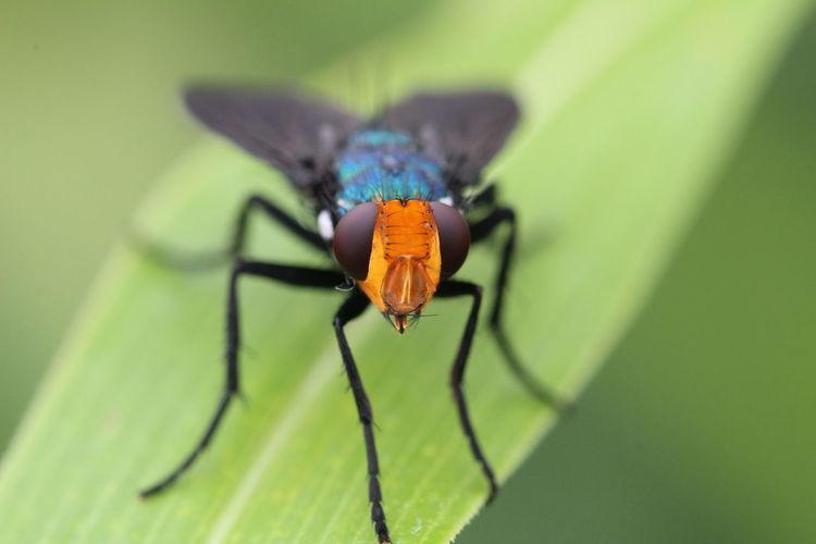 Macro Fly Bug
