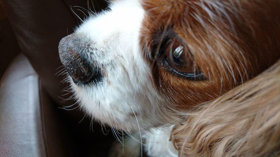 I'm missing you... Animal Dog❤ Dog Portrait Cute Dog  Cute Pets Emotion