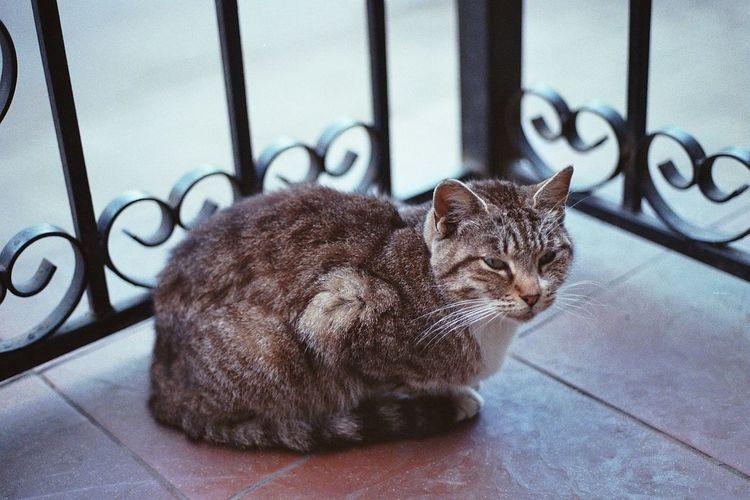 14. - 20. August 2017, Kaliningrad Pets Animal Themes Cat Russia 35mmfilmphotography 35mm