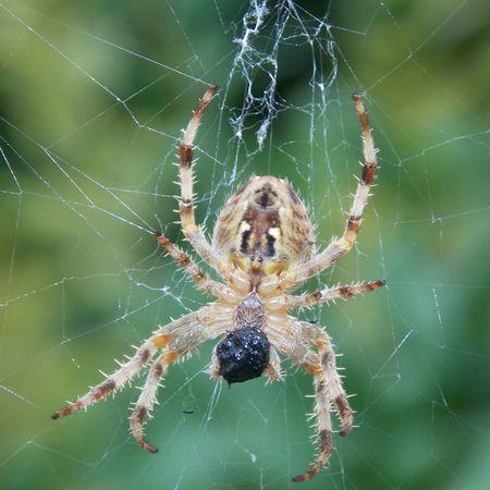 spider Nikonphotography Spidersweb Spider