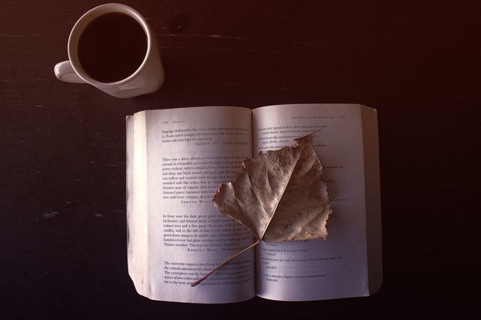 Open Book Directly Above Studio Shot No People Close-up Tea - Hot Drink Black Background Day Mug Indoors  Drink Pages Books Leaf Fall Autumn Dry Paper Lines Words Directly Above Studio Shot Brown No People Close-up Food And Drink