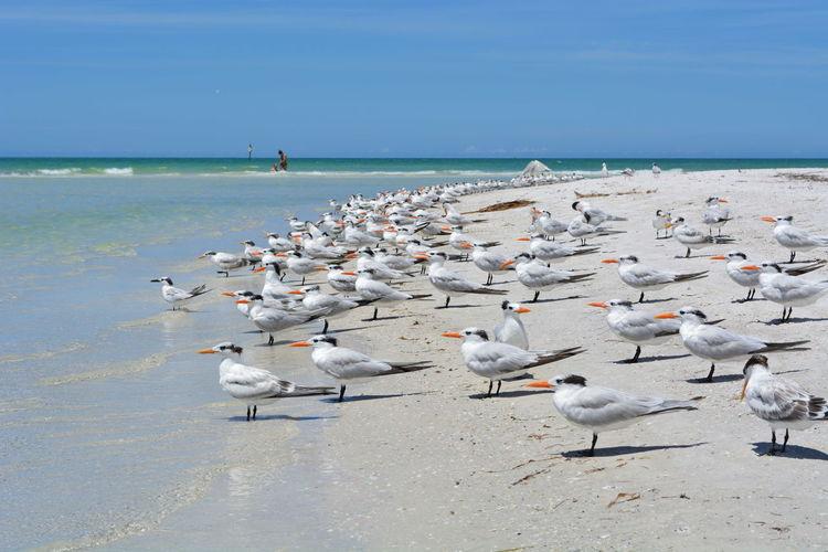 Seagulls on beach at tampa bay