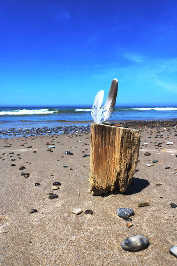Denmark Beach Beauty In Nature Blue Day Horizon Horizon Over Water Houvig Idyllic Land Nature No People Sand Scenics - Nature Sculpture Sea Shell Sky Strandgut Sunlight Tranquil Scene Tranquility Water Wooden Post