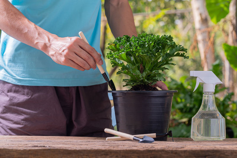 Midsection of woman holding flower pot at table
