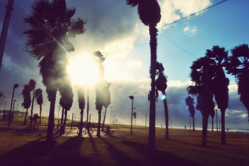 Hello World ✌ Traveling Palm Trees Trees Green Grass Sea Sky Sea And Sky Shadow Sun Eye4photography  EyeEm Best Shots