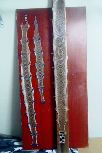 Taking Photos Check This Out Casagrande AriZona♡ Rattlesnake Snakeskin Snakes Snake!!  Snakeskins