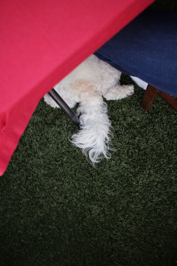 Our dog sneakily waiting for food under the table Beg Begging Close-up Day Dog Dog Begging Dog Face Dog Food Dog Tail Elevated View Floor Food Funny Ground No People Part Of Pink Color Puppy Red Softness Table Tail Under Table White