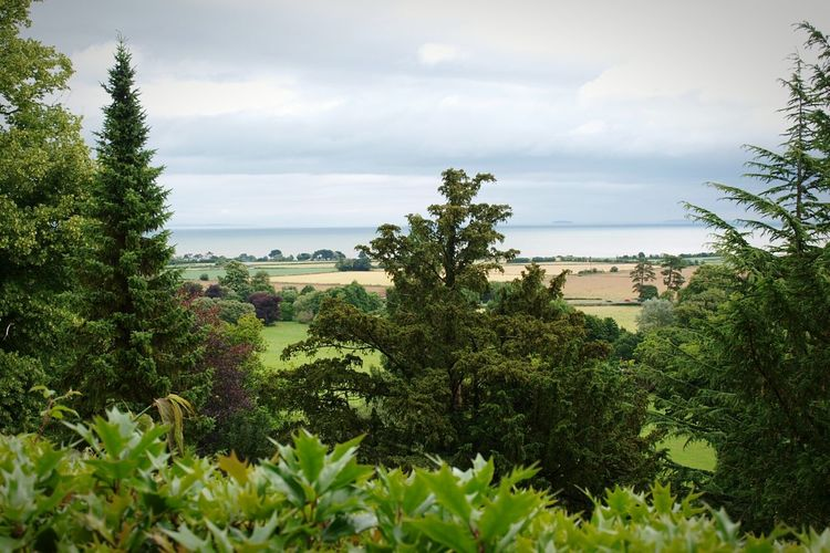 Trees and Fields View to the Coast Sea from the Walls of Dunster Castle Dunster