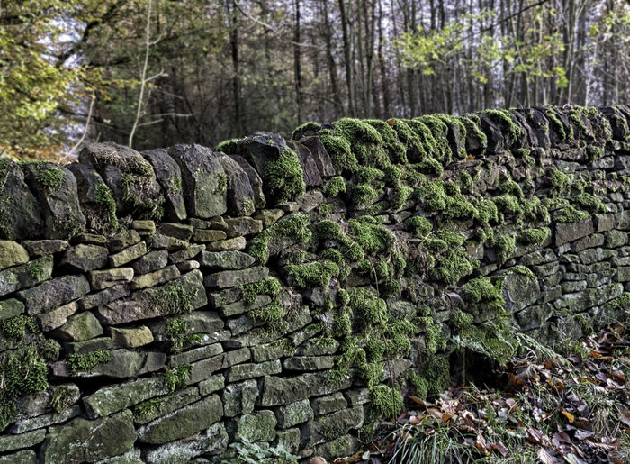 Dry Stone Wall Abundance Beauty In Nature Day Forest Growth Large Group Of Objects Lichen On Wall Mosy Wall Nature No People Outdoors Scenics Stone - Object Tranquility Tree Tree Trunk