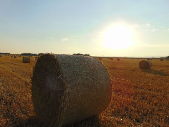 Daytime Grass Agriculture Bale  Beauty In Nature Day Dry Farm Field Grass Harvesting Hay Hay Bale Haystack Landscape Nature No People Orange Color Outdoors Rural Scene Sky Sun Tranquil Scene Tranquility Warm