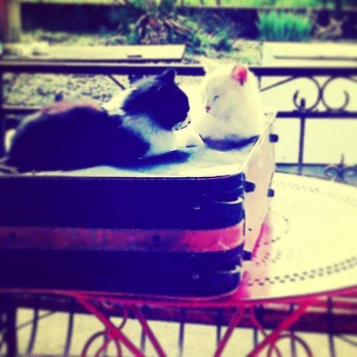 Chats Mimi Miaouh Love .