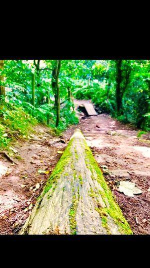 EyeEm Nature Lover Log Steps Bridge Timber Nature Forest Wirral Moss Green Color United Kingdom