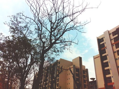 Trees TheDay Picoftheday Light Daylight Daylife Alone NOthIng