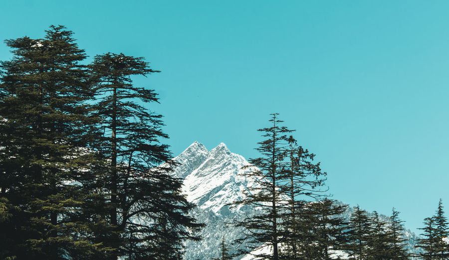 when the landscape looks like a painting ... Manali Himalayas Hinachalpradesh Beautiful Nature Forest Beauty In Nature Mountains Exploring Landscape Rocky Mountains Tree Branch Clear Sky Sky Growing Treetop Countryside Woods Snow Covered Tree Trunk Stem WoodLand The Great Outdoors - 2019 EyeEm Awards The Traveler - 2019 EyeEm Awards