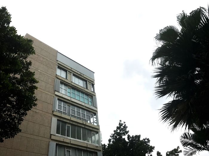 Tree Low Angle View Building Exterior Architecture No People Outdoors Day Nature Sky Teddyhb