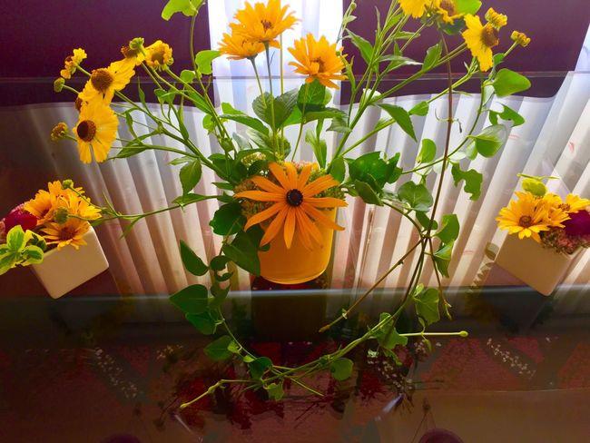 Blumen *~* Blumen Blumenpracht🌺🍃